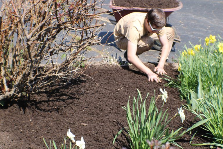 Landscaping contractor applying mulch to a new flower bed.
